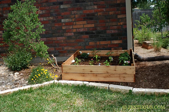 Recipe for a fruitful veggie garden